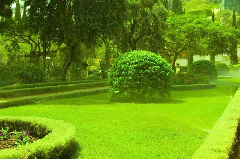 Picture of lush garden with beautifully maintained hedges and bushes